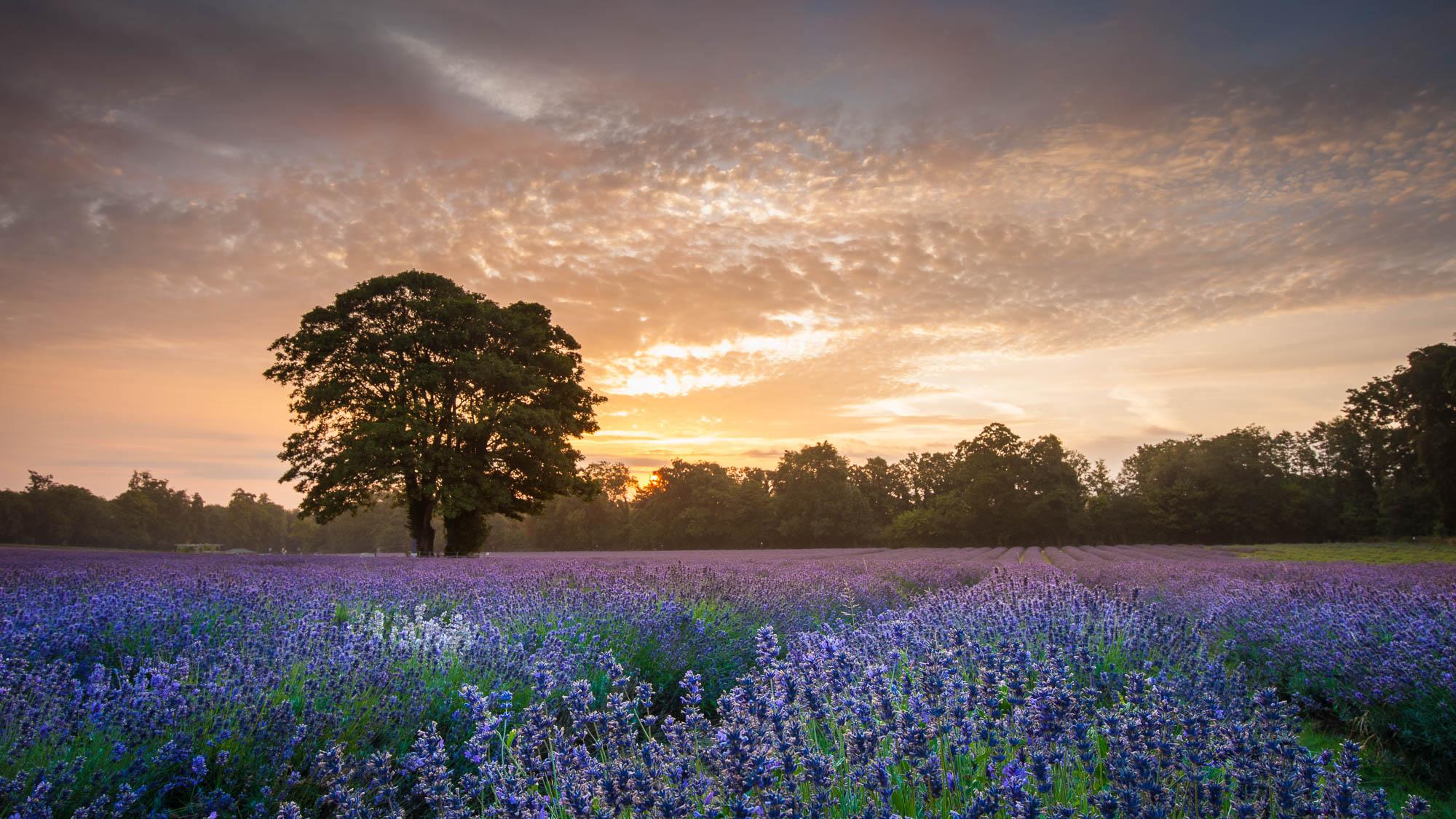 Mayfield, Surrey